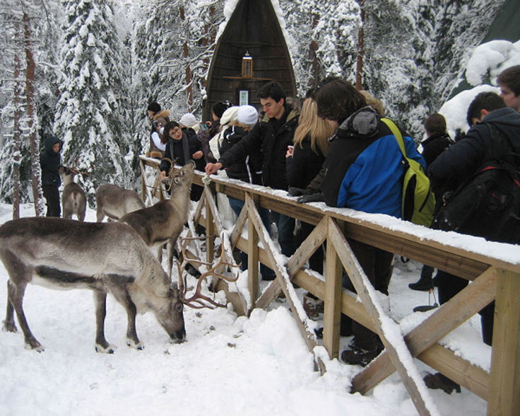 Nuuksio Reindeer farm winter.jpg