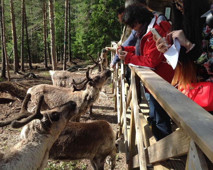 Nuuksio-Reindeer-Park-summer.jpg