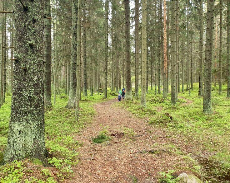 Linlo metsäpolku.jpg