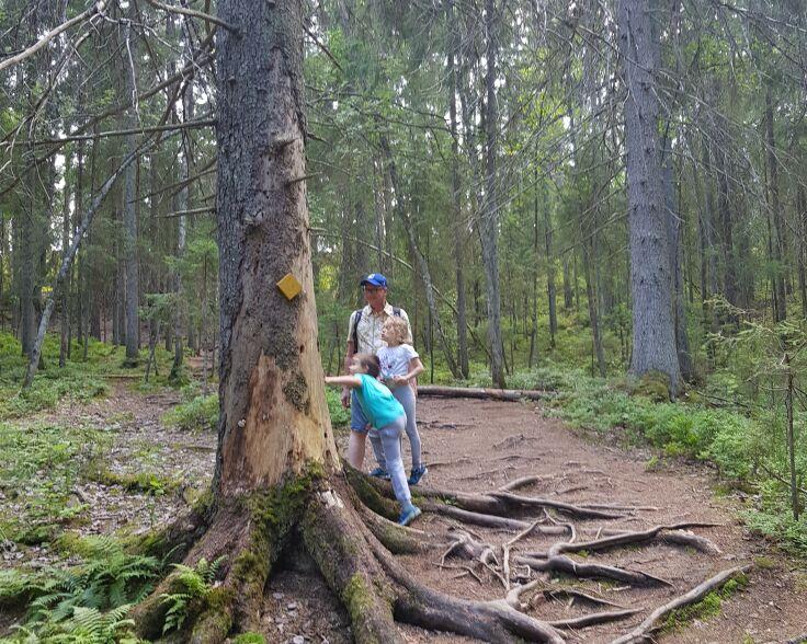 Meiko ihmisiä vanhaa metsää.jpg