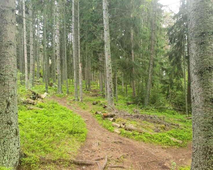 Linlo metsäpolku2.jpg
